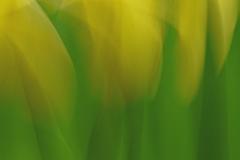 Yellows and Greens