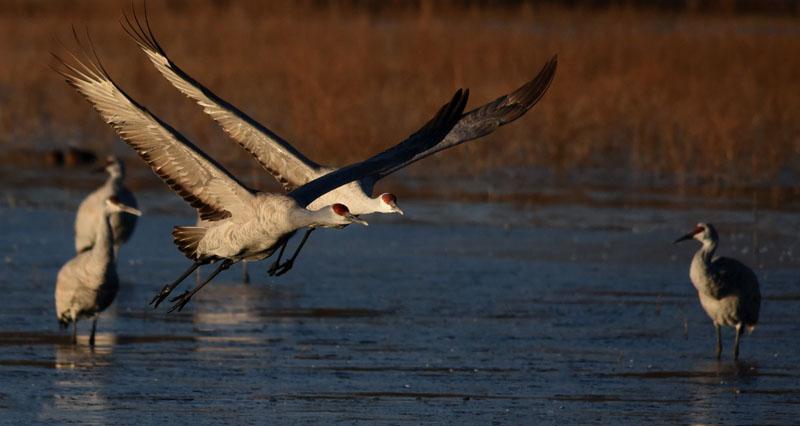 Crane Liftoff